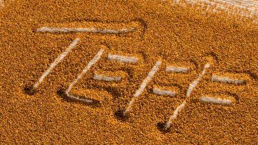 Teff tohumu nedir ? Özellikleri nelerdir ?